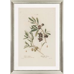 Decorative picture olives Roquebrune