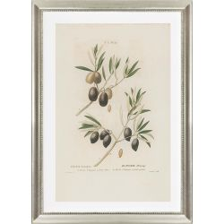Decorative picture olive tree Roquebrune