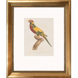 Decorative picture yellow parrot Lafresnaye